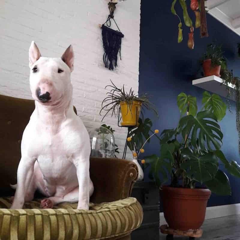 binnenkijken hond blauwe muur