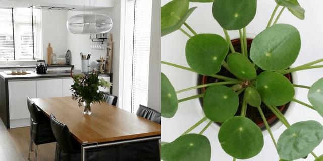 binnenkijken plant keuken