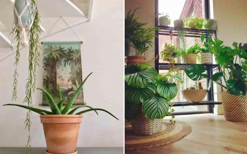 binnenkijken urban jungle planten