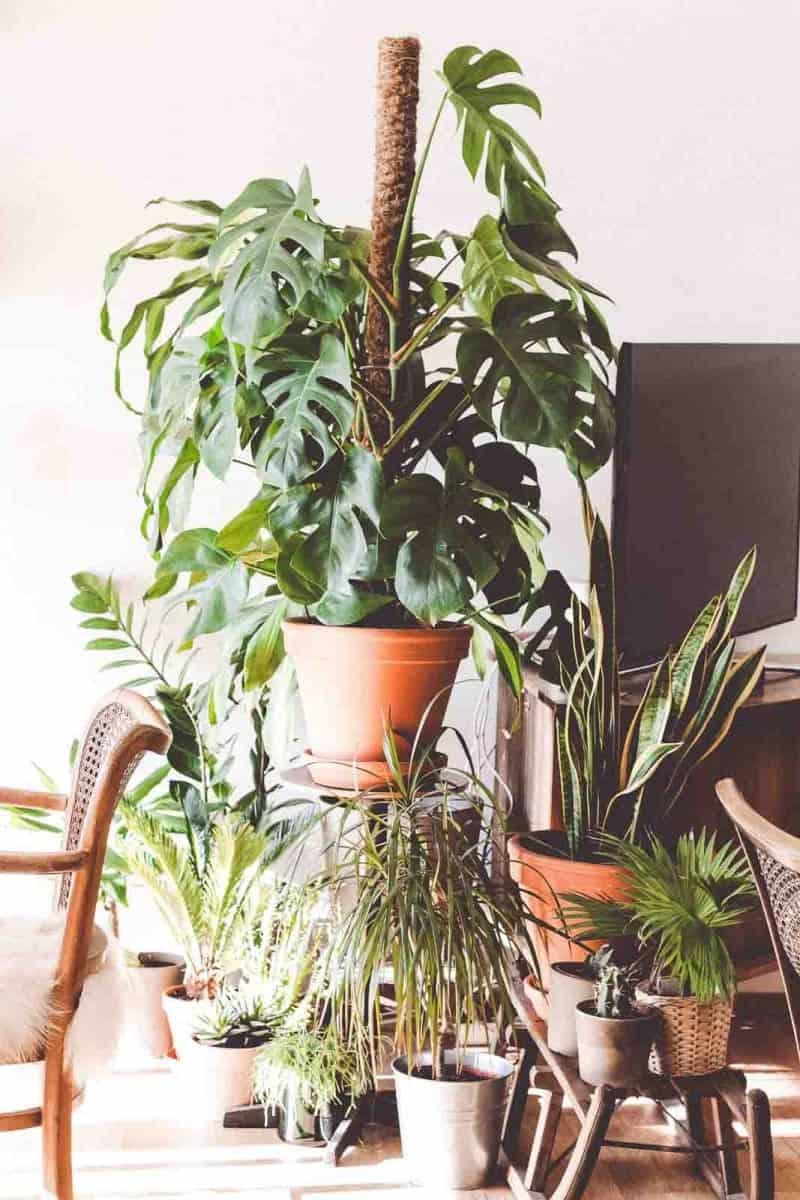 groene planten inspiratie