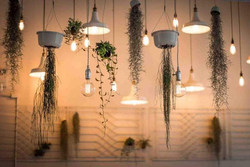planten plafond inspiratie